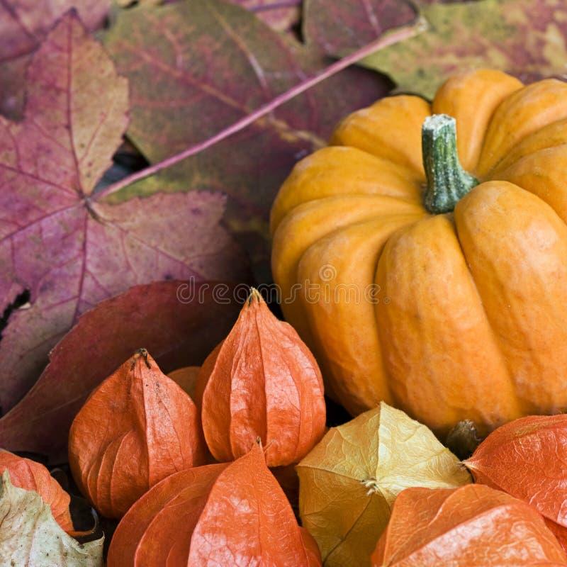 De herfst nog l ife royalty-vrije stock afbeelding