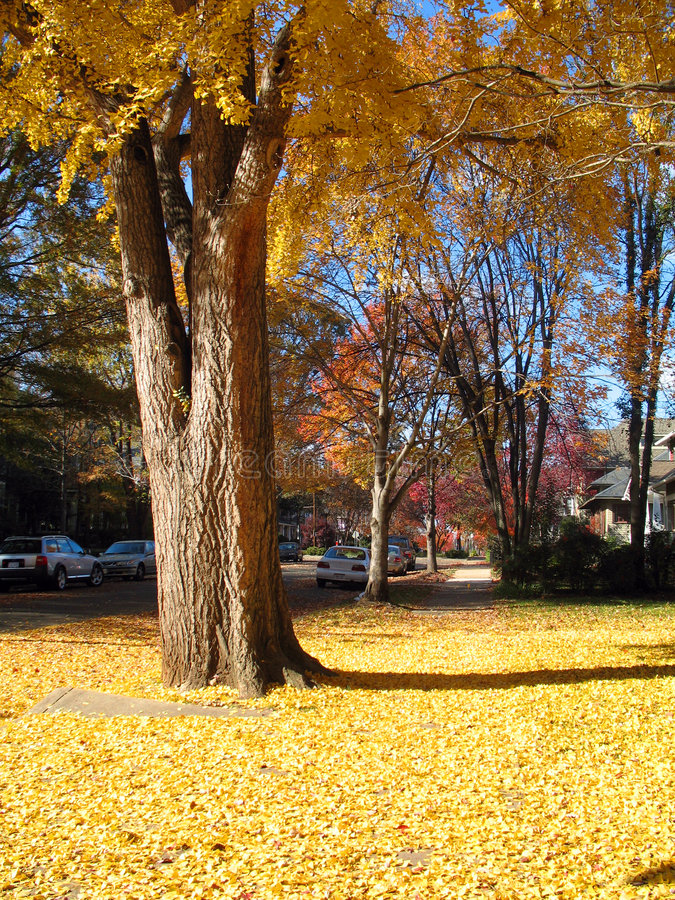 De herfst in Noord-Carolina royalty-vrije stock afbeelding