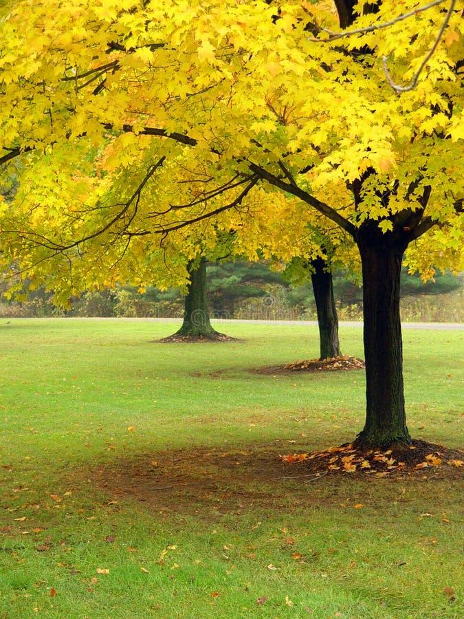 De herfst in Ohio royalty-vrije stock fotografie