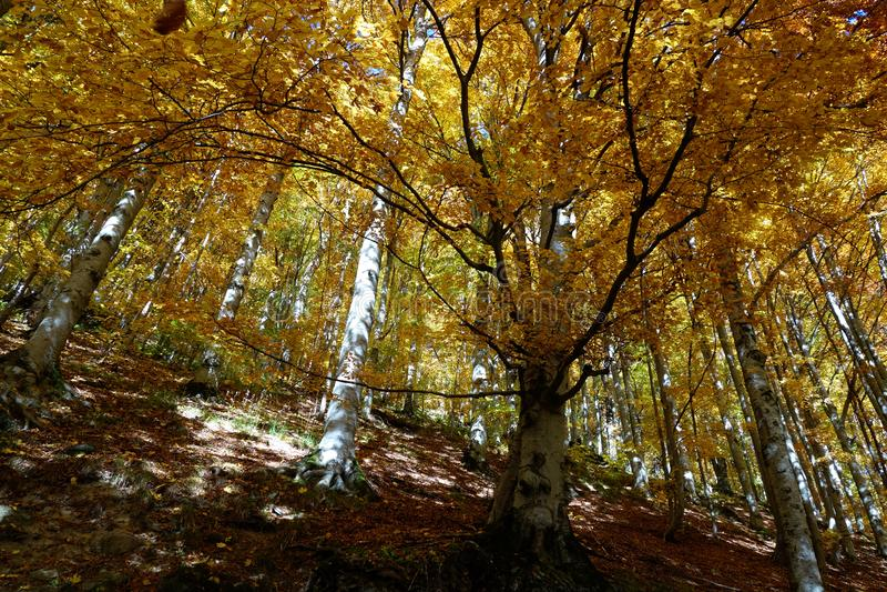 De herfst in Oktober wanneer de bossen bladeren 1 schudden stock foto