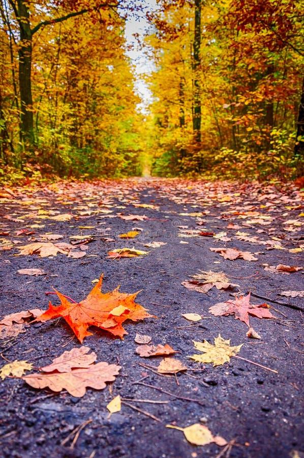 De herfst op bosweg III royalty-vrije stock afbeelding