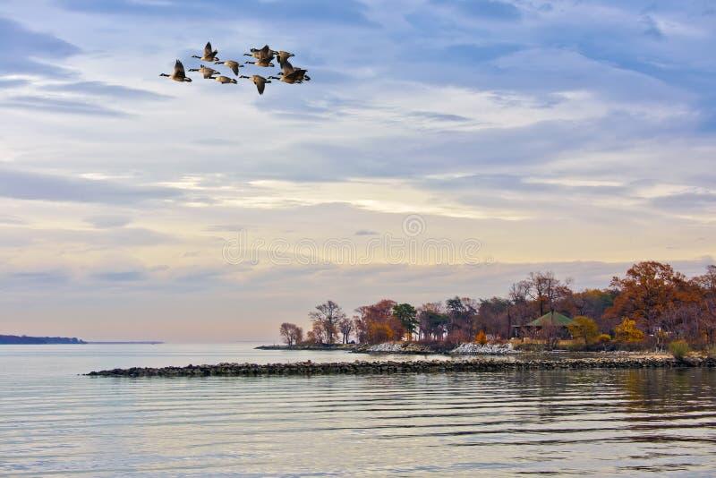 De herfst op de Chesapeake Baai royalty-vrije stock afbeelding