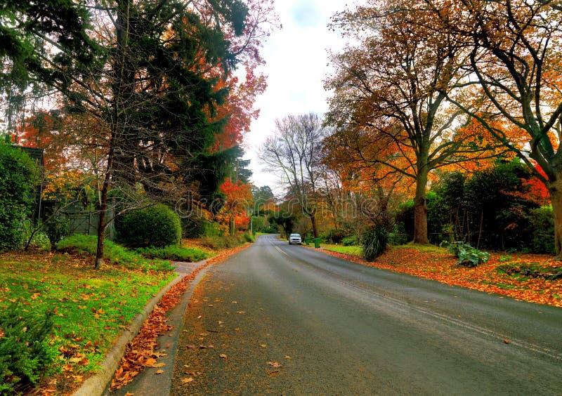De herfst op de landweg stock afbeelding