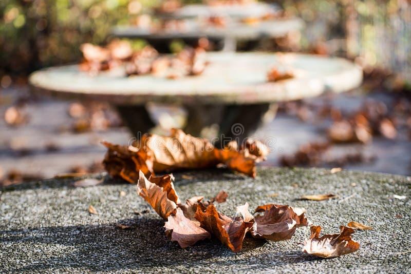 De herfst op een steenlijst royalty-vrije stock afbeelding