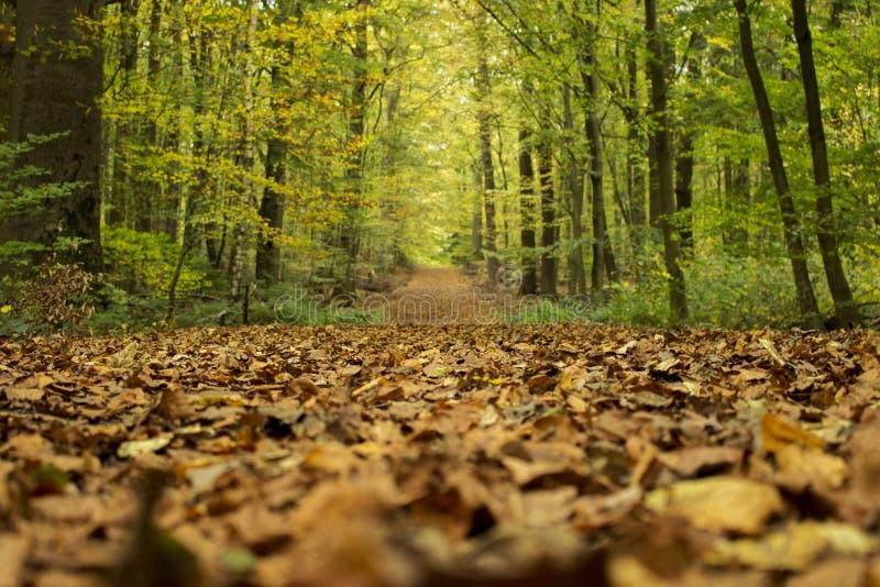 De herfst op het bos stock afbeelding
