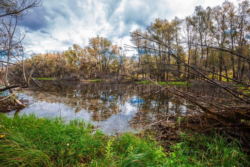 De herfst op rivier Westelijk Siberië stock fotografie