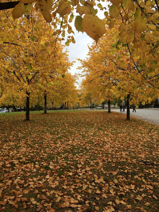 De herfst in Oslo royalty-vrije stock foto's