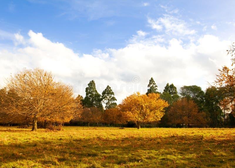 De herfst in park 3 royalty-vrije stock foto