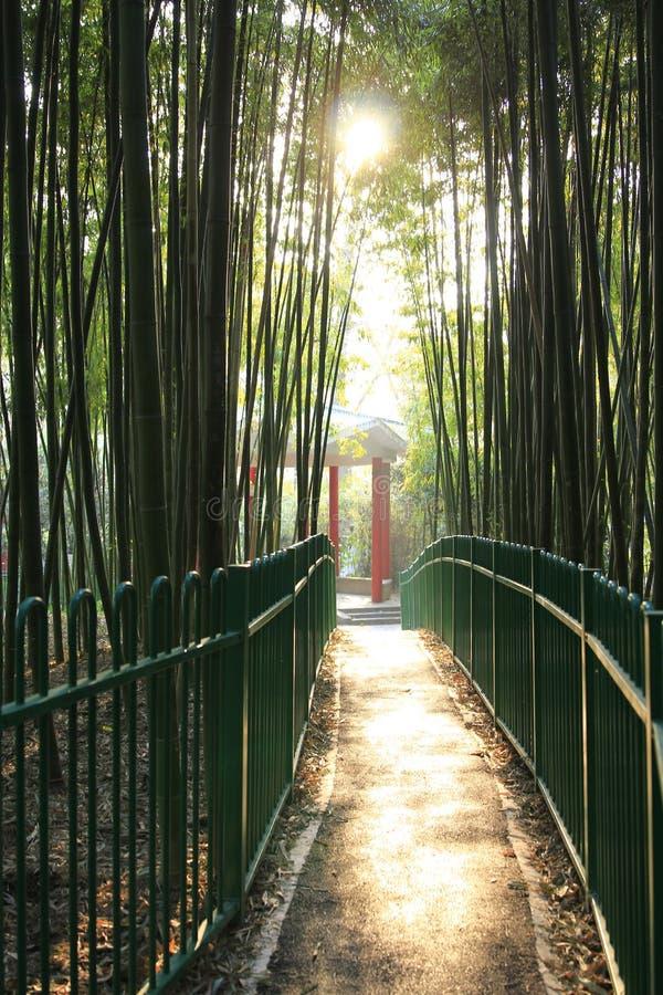 De herfst park-bamboe bosje royalty-vrije stock foto