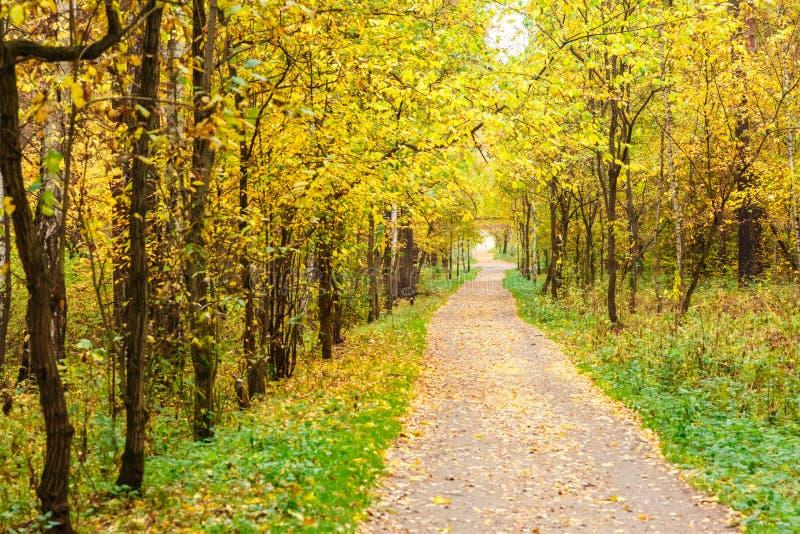 De herfst in pijnboom en berkbos stock foto