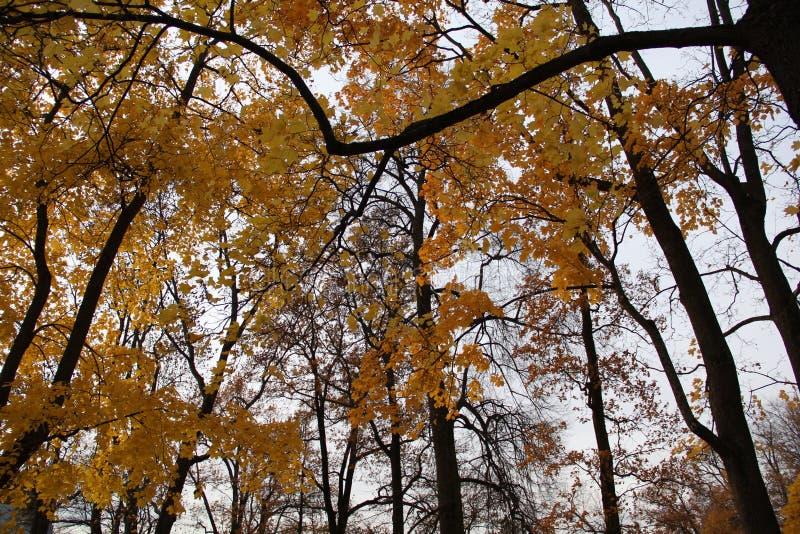 De herfst pushkin Het park van Catherine stock fotografie