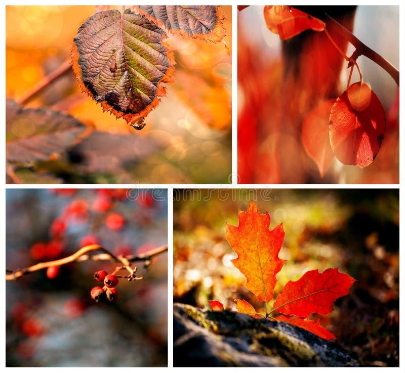 De herfst rode details royalty-vrije stock foto