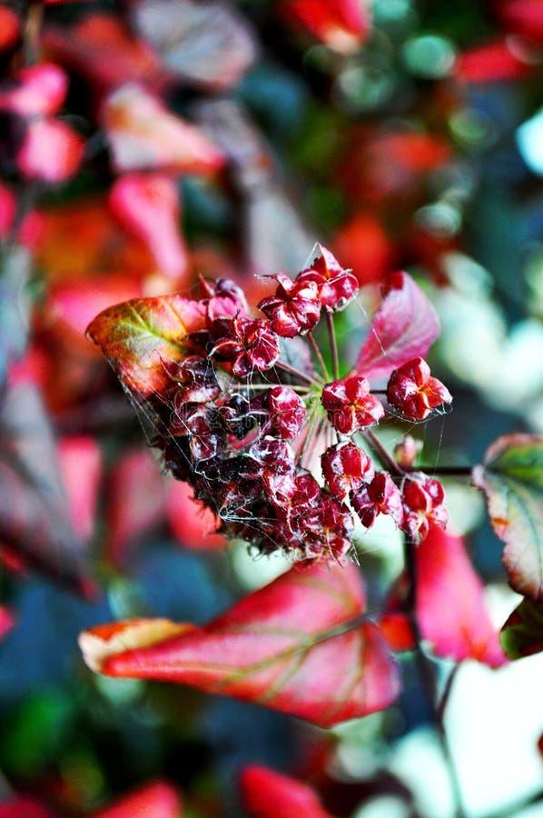 De herfst in rode schaduwen royalty-vrije stock afbeeldingen