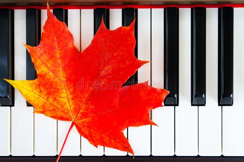 De herfst rood blad op pianosleutels stock fotografie