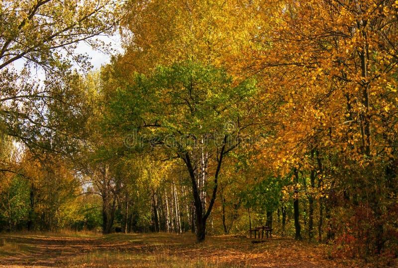 De herfst rood-geel landschap, zonnige dag in het bosje, selectief F stock fotografie
