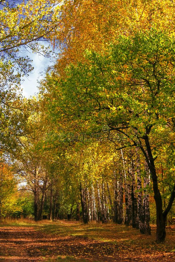 De herfst rood-geel landschap, zonnige dag in het bosje, selectief F royalty-vrije stock foto