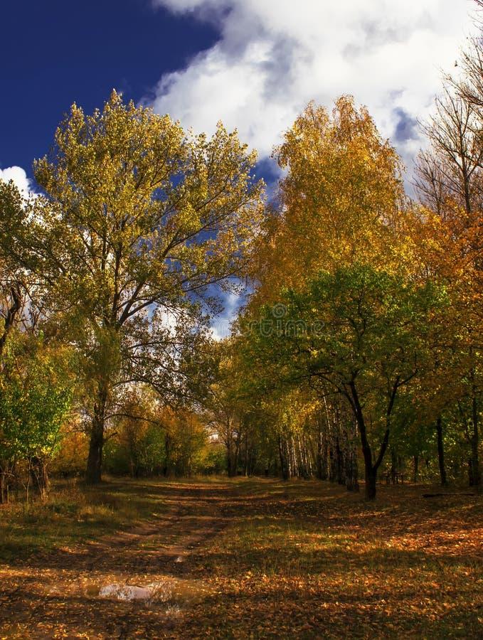 De herfst rood-geel landschap, zonnige dag in het bosje, selectief F stock afbeeldingen
