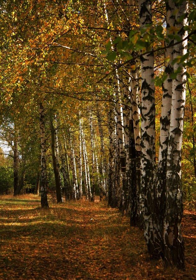 De herfst rood-geel landschap, zonnige dag in het bosje, selectief F royalty-vrije stock afbeeldingen