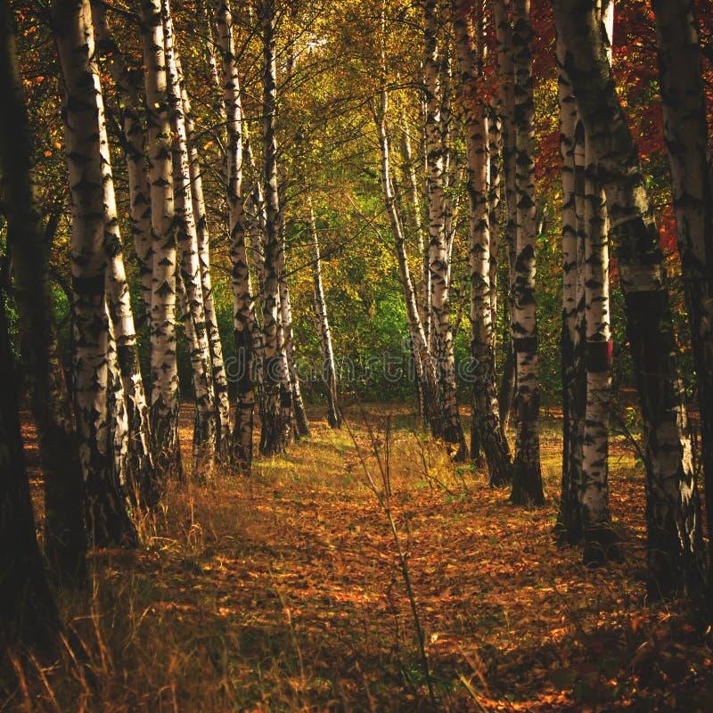 De herfst rood-geel landschap, zonnige dag in het bosje, selectief F royalty-vrije stock foto's