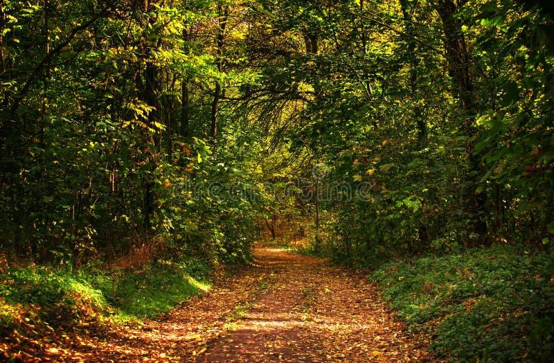 De herfst rood-geel landschap, zonnige dag in het bosje, selectief F stock afbeelding