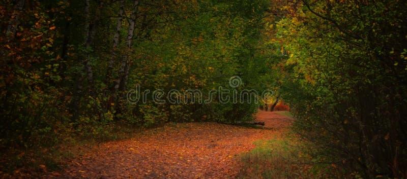 De herfst rood-geel landschap, zonnige dag in het bosje, selectief F stock foto
