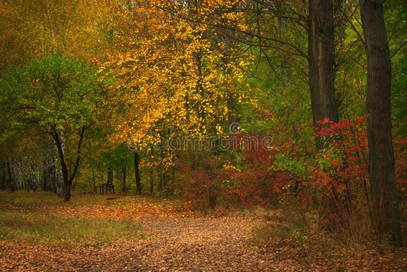 De herfst rood-geel landschap, zonnige dag in het bosje, selectief F royalty-vrije stock afbeelding