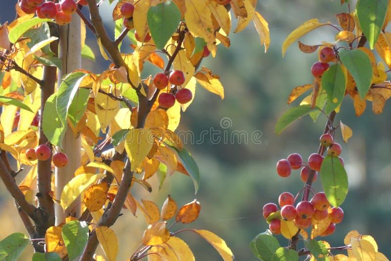 De herfst in Sakur Park is bedoeld om schoonheid en rust, ontspanning en vrede te overwegen stock afbeelding