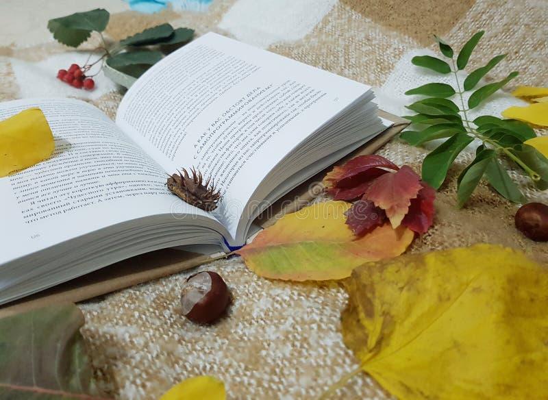 De herfst De sc?ne van de dalingsaard Mooi HerfstPark royalty-vrije stock fotografie