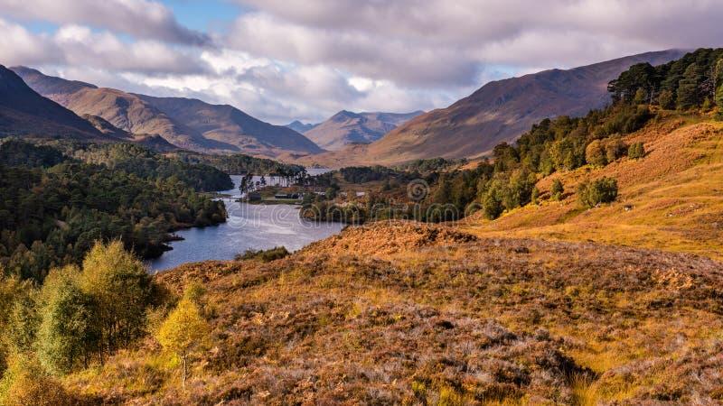 De herfst in Schotland ` s Glen Affric stock afbeelding