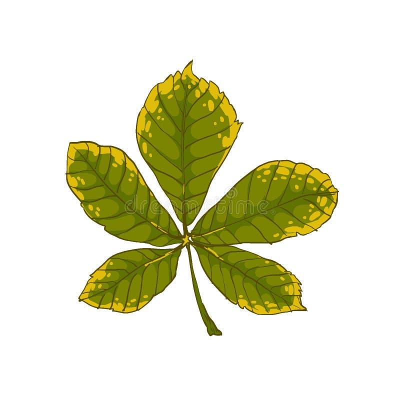 De herfst seizoengebonden bladeren Mooi gekleurd blad van een kastanjeboom royalty-vrije illustratie