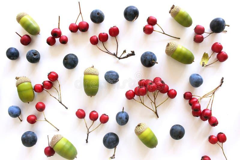 De herfst stileerde botanische regeling Samenstelling van de vruchten van de rode haagdoornbessen, de eikels en de sleedoorn op w royalty-vrije stock foto