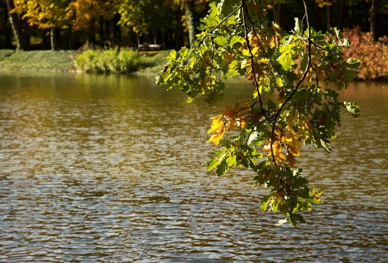 De herfst Tak met eiken bladeren op een achtergrond van water horizont royalty-vrije stock afbeeldingen