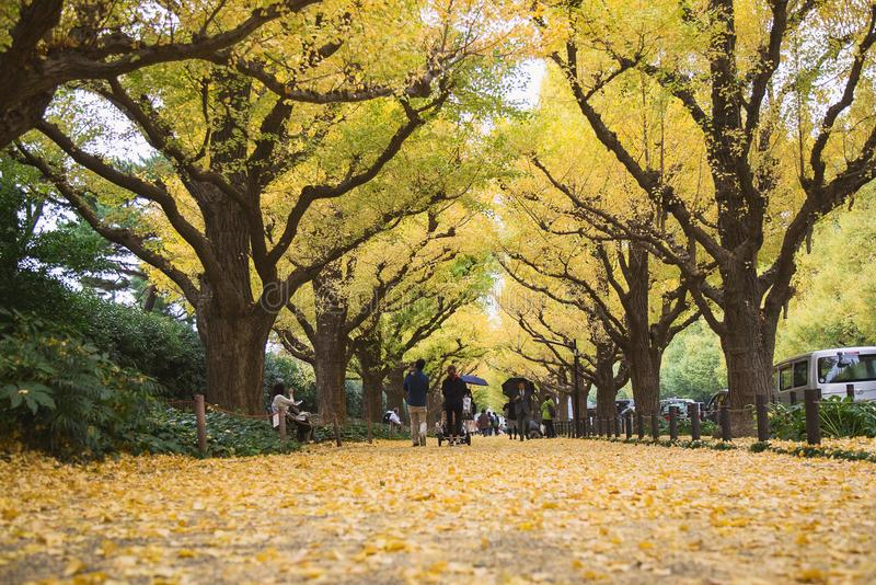 De herfst in Tokyo binnen met geel blad van de daling van de ginkgoboom ter plaatse royalty-vrije stock foto's