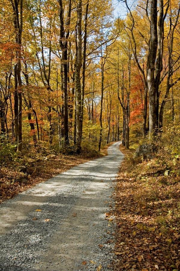 De herfst Toneel, Oost-Tennessee stock foto's