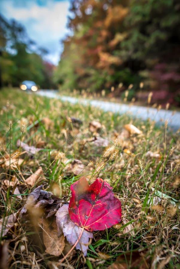 De herfst toneelaandrijving langs blauw randbrede rijweg met mooi aangelegd landschap royalty-vrije stock afbeeldingen