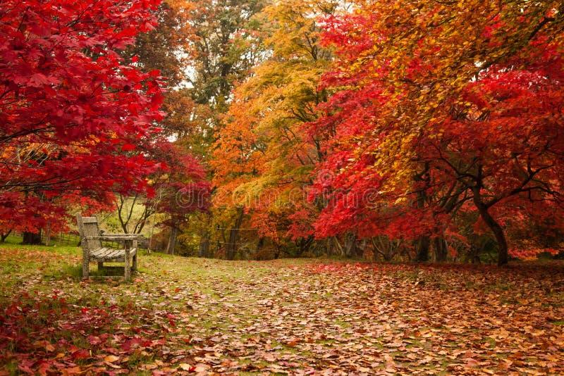 De herfst in Tuin Bodnant royalty-vrije stock fotografie