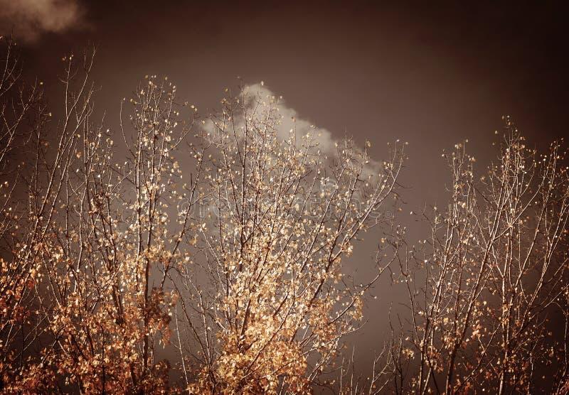 De herfst uitstekende bomen stock afbeeldingen