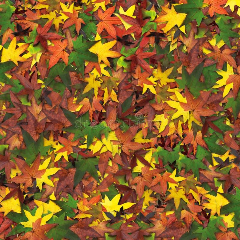 De herfst van bladeren royalty-vrije stock afbeelding