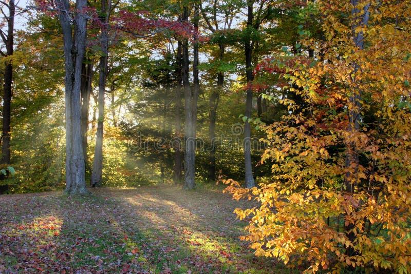 De Herfst van de recente Middag stock foto's