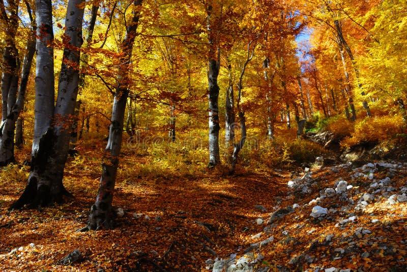 De herfst van het landschap in het bos stock fotografie