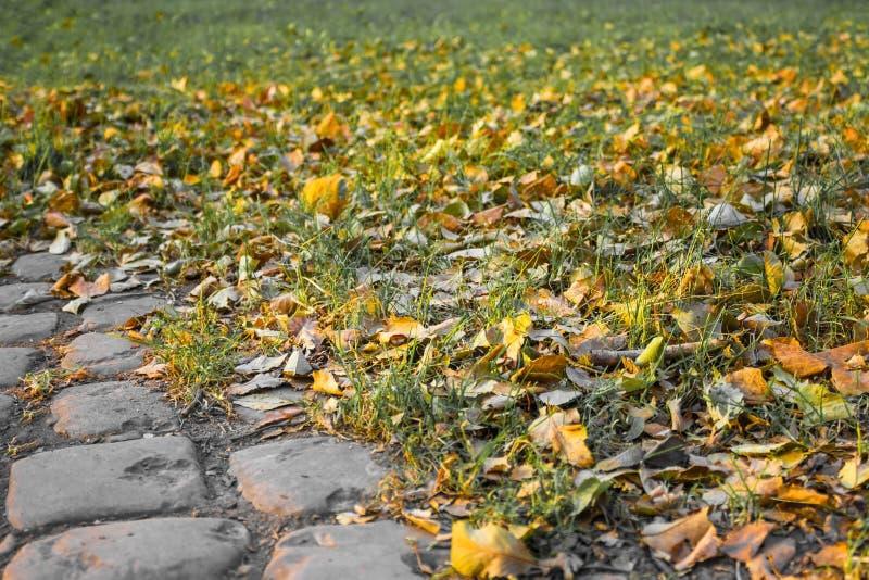 De herfst van het leven, zonsondergang royalty-vrije stock fotografie