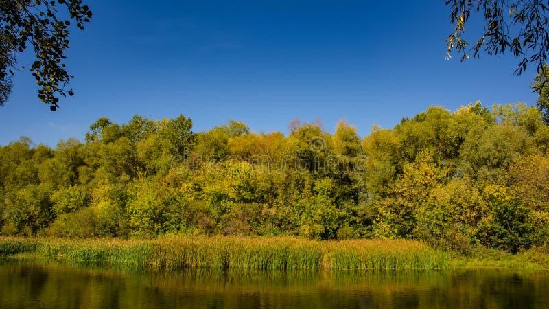De herfst vergankelijk bos en rivier op een zonnige dag Verbazend landschap stock foto's