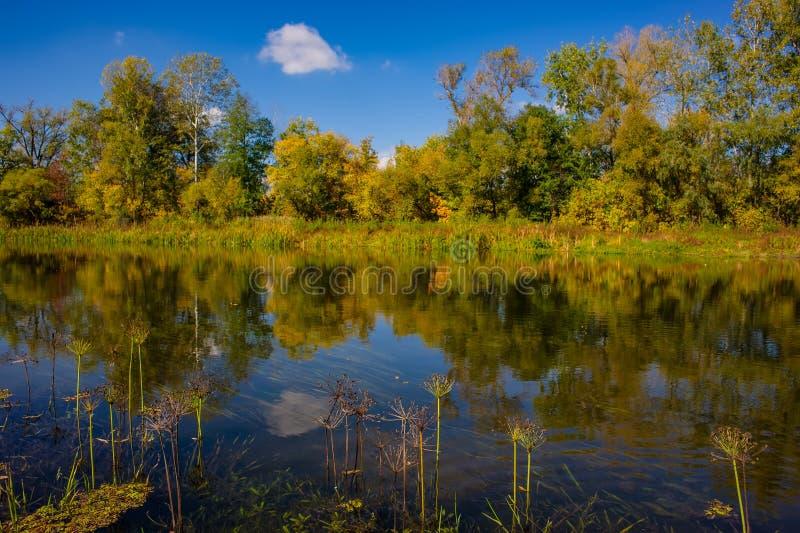 De herfst vergankelijk bos, waterrivier en de rivierbank op een zonnige dag Verbazend landschap stock afbeelding