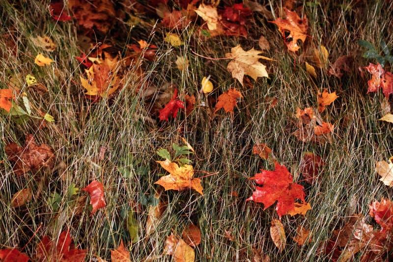De herfst verlaat droog gras Autumn Colors royalty-vrije stock foto