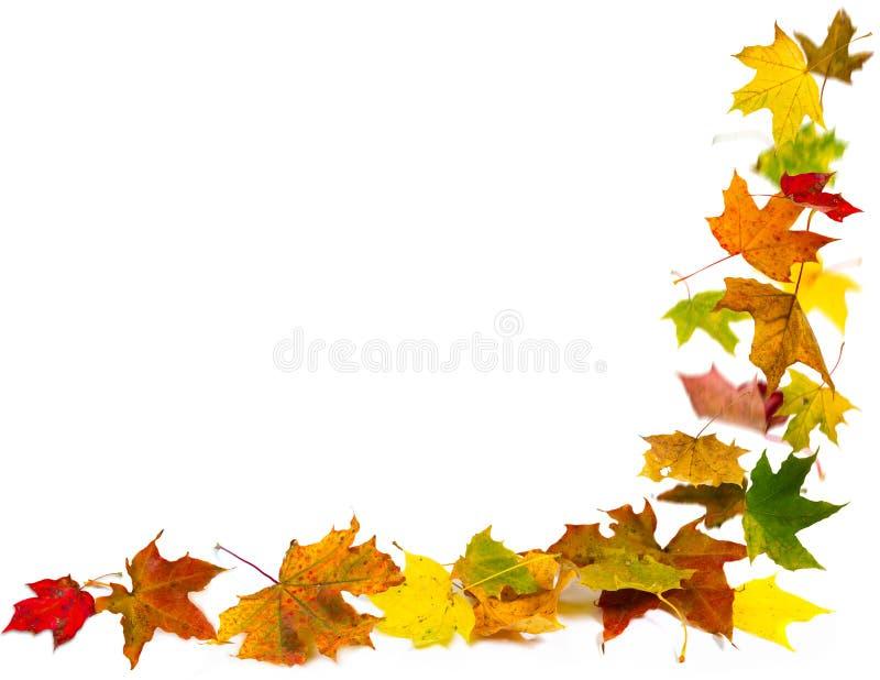 De herfst verlaat frame stock afbeelding
