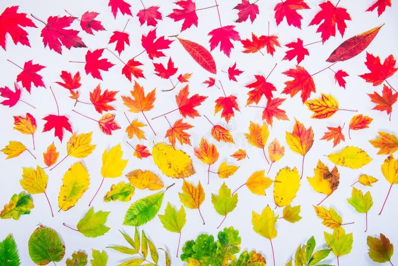 De herfst verlaat gradiënt de kleurrijke van de het patroondaling van het regenboogblad de kleurenvlakte, hoogste mening legt Sei stock afbeeldingen
