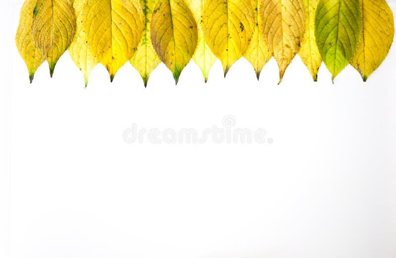 De herfst verlaat kader op een witte achtergrond wordt geïsoleerd die royalty-vrije stock foto