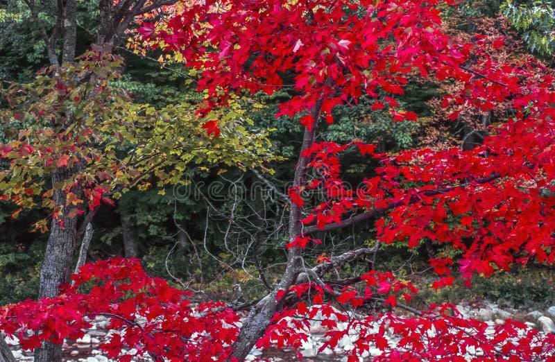 De herfst verlaat Nieuwe Hasmpshire royalty-vrije stock foto's
