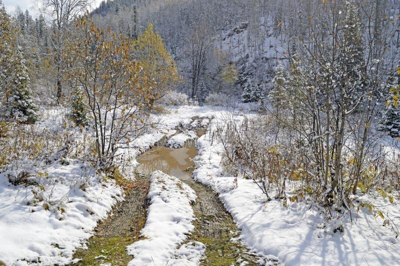 De herfst, 30 09 2017 Was duidelijk de hemel, maar in het bos de eerste sneeuw heeft overgegaan royalty-vrije stock afbeelding