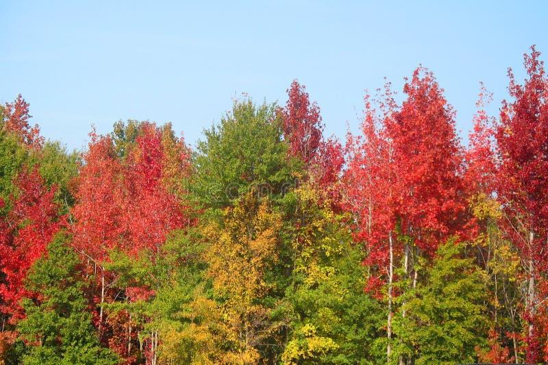 De herfst in Zuid-Carolina royalty-vrije stock foto's